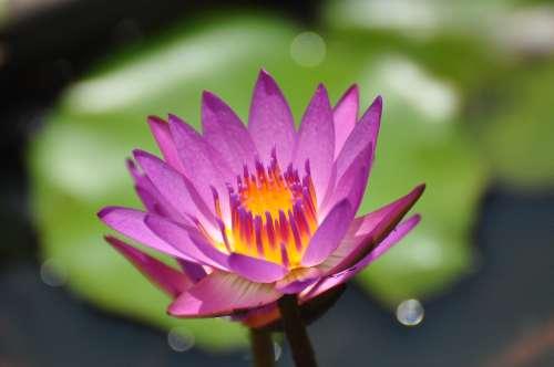 Flower, f/5.6: nice background blur