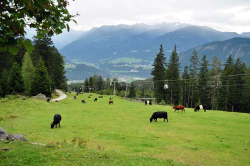 Is that a beginner or intermediate ski slope in winter?  Guess it depends if the cows are still there.