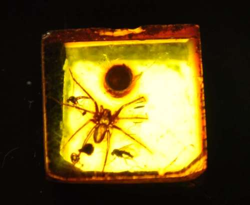 Spider in amber at the Natural History Museum in Vienna