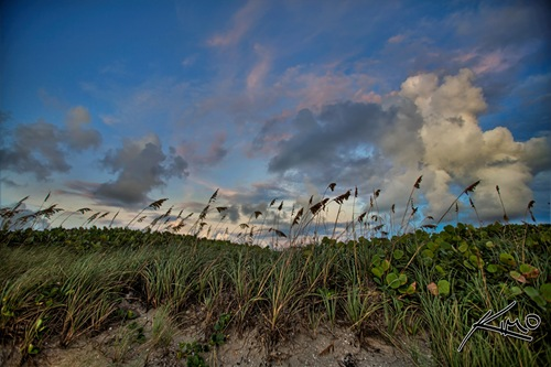 02_blowing-rocks-preserve-jupiter-floirda-hdr-beach-sunrise-seagrape-cat-tails