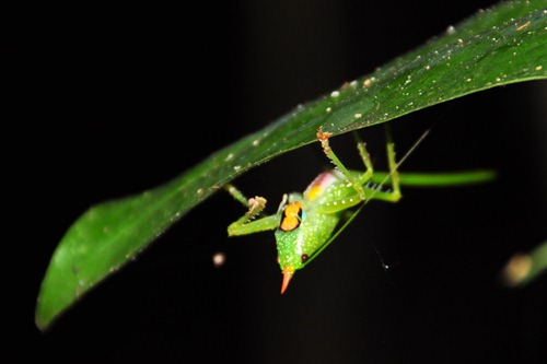 Up Close and Personal with a Rainforest Insect