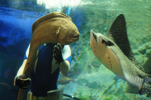 Eel and Stingray - Best Friends Forever