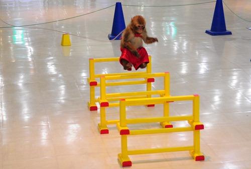 A Levitating Monkey in the mall near the Tokyo Aquarium