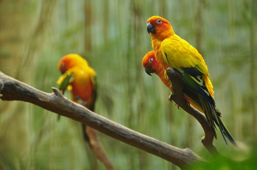 Some kind of brightly-colored birds - lovebirds?