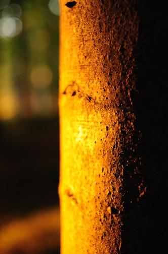Blur to texture