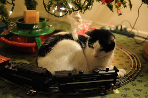 Kitty under Christmas Tree with Train